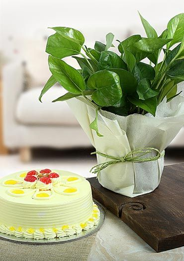 Cake with Plant