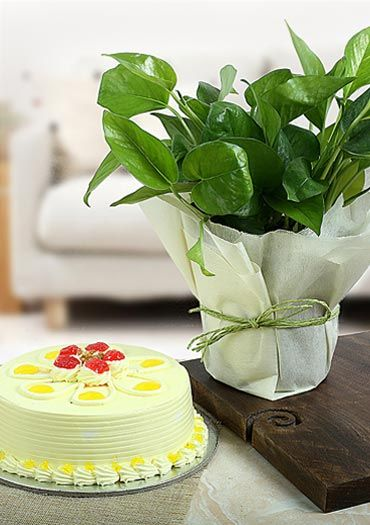 Plants with Cake
