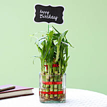 2 Layer Bamboo Plant For Happy Birthday: Indoor Plants