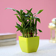 2 Layer Bamboo Plant In Green Melamine Pot: Plants Delhi
