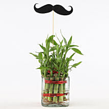 2 Layer Bamboo Plant With Mustache: Plants Delivery Today