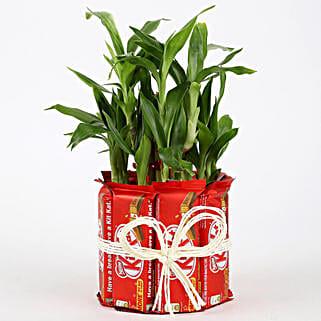 2 Layer Lucky Bamboo Kit Kat Chocolates: Order Plants n Chocolates