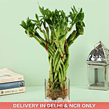 20 Bamboo Stalks Flower Cage Bamboo In Square Vase: Premium & Exclusive Gift Collection