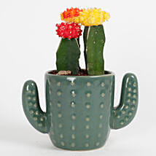 3 Moon Cactus Plants In A Cactus Vase: Succulents