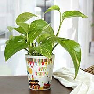 Birthday Special Plant:
