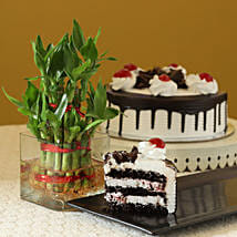 Blackforest Cake N Two Layer Bamboo Plant: Gift Combos