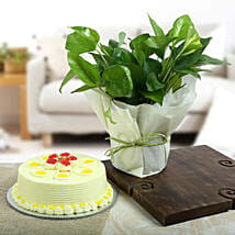Butterscotch Cake N Lucky Money Plant: Plants for birthday