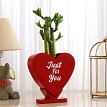 Cut Leaf Bamboo In Heart Shaped Pot: Lucky Bamboo Plants