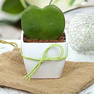 Cute Love Plant: Send Shrubs