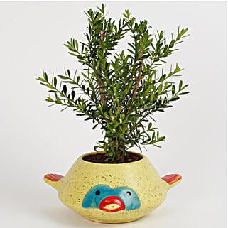 Designer Unimus Plant: