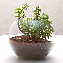 Fantastic Jade Terrarium: Gifts to India