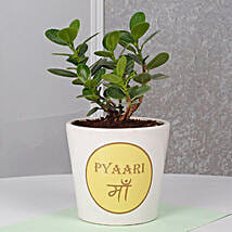 Ficus Dwarf Plant For Mom: