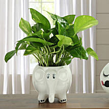 Freshen Up Money Plant: Home Decor Anniversary Gifts