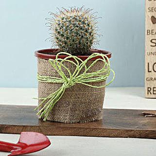 Furry Echinocactus Plant: Exotic Plants
