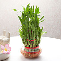 Good Luck Three Layer Bamboo Plant: Lucky Bamboo for Diwali