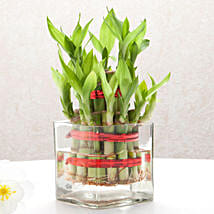 Good Luck Two Layer Bamboo Plant: Send Lucky Bamboo for Birthday