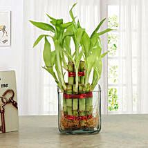 Good Luck Two Layer Bamboo Plant: Send Plants for House Warming