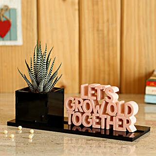 Grow Old Together Haworthia Zebra Plant: Send Plants for Anniversary