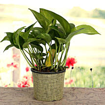 Growing 24x7 Money Plant: Diwali Gifts for Kids