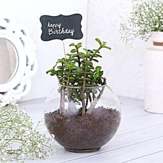 Happy Birthday Jade Plant Terrarium: Buy Indoor Plants
