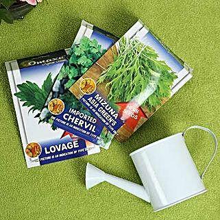 Healthy Herbs: