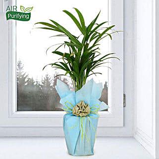 Impressive Areca Palm: Diwali Gifts for Kids