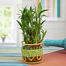 Love For Lucky Bamboo: Plants for anniversary
