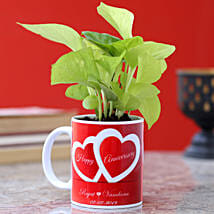Love Special Golden Money Plant: Plants for anniversary