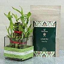 Luck n Health Together: Plants for Wife