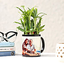 Lucky Bamboo in Personalised Black Mug: Plants - Same Day Delivery