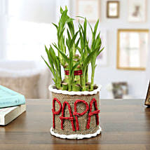 Lucky Bamboo Plant For Papa: