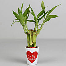 Lucky Bamboo Plant in Be My Valentine Ceramic Pot: Valentine Gifts for Wife