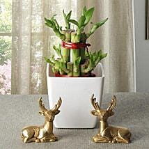 Lucky Bamboo With Deers: Plant Combos