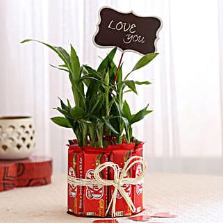 Lucky Bamboo with Kit Kat Chocolates Combo: Send Plants n Chocolates