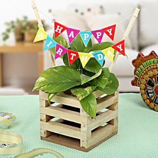 Make It Best Birthday Gift: Plants for birthday