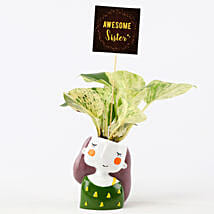 Money Plant In Green Pot For Sister: Rakhi Return Gifts for Sister