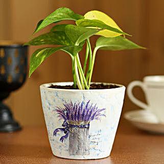 Money Plant In Purple Ceramic Pot: Planter Pots