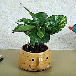 Money Plant In Smiley Vase: Spiritual Plant