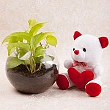 Money Plant Terrarium N Cute Teddy Combo: Money Plant
