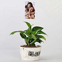Money Plant With Your Personalised Picture: