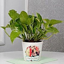 Mothers Day Special Money Plant: Money Tree