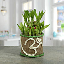 Om Two Layer Bamboo plant: Send Chhat Puja Gifts