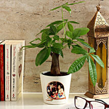 Pachira Bonsai in Personalised Photo Ceramic Pot: Gifts for Anniversary