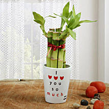 Personalized Love Bamboo: Send Plants for Anniversary