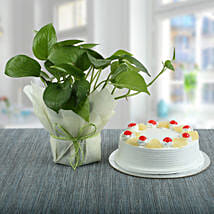Pineapple Cake With Money Plant: Combos