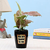 Pink Syngonium In You Are Special Pot: Indoor Plants