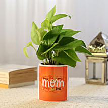 Prosperous Money Plant For Mom: Air Purifying Plants