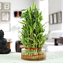 Ravishing 5 Layer Lucky Bamboo Plant: Anniversary Gifts for Parents
