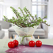 Red Candle Balls with Jade Plant: Send Good Luck Plants