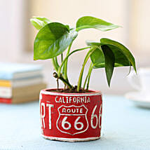 Red Potted Money Plant: Plants Delivery